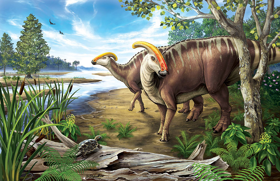 Parasaurolophus was a genus of herbivores from the Late Cretaceous. Image: Danielle Dufault, Royal Ontario Museum
