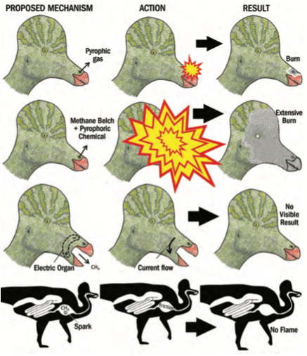 "From ""Fire-Breathing Dinosaurs? Physics, Fossils, and Functional Morphology vs. Pseudoscience,"" Skeptical Inquirer Vol. 41, #4"