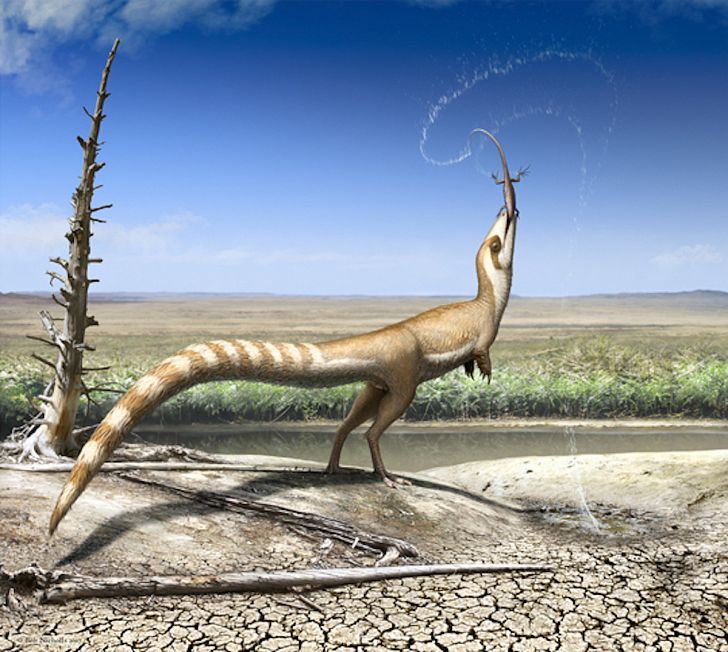 The feathered Sinosauropteryx. Image credit: Robert Nicholls/Wikimedia.org