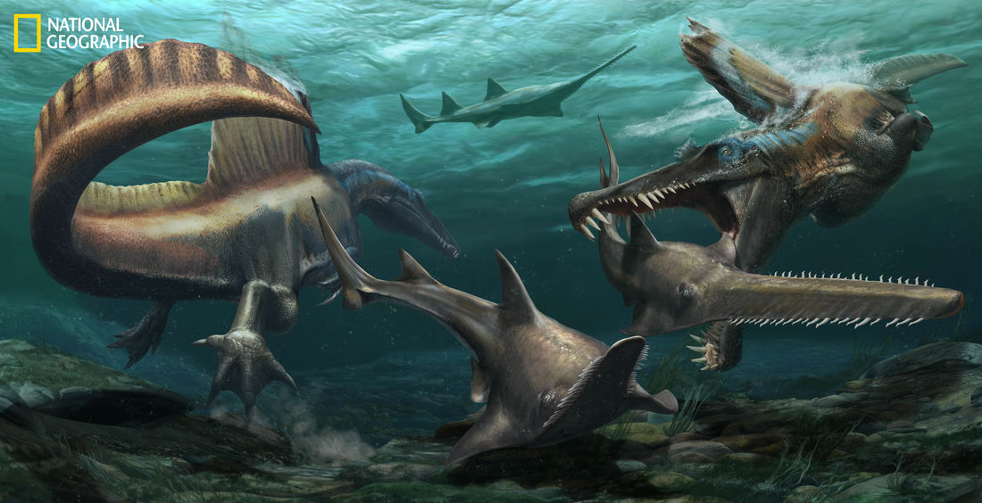 Two Spinosaurus aegyptiacus hunt Onchopristis, a prehistoric sawfish, in the waters of the Kem Kem river system in what is now Morocco. Image credit: Jason Treat / National Geographic Staff / Mesa Schumacher / Davide Bonadonna / Nizar Ibrahim, University of Detroit Mercy.
