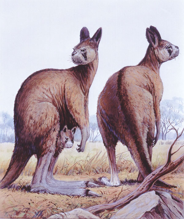 Ancestors of Modern-Day Kangaroos Walked Upright on Two Feet