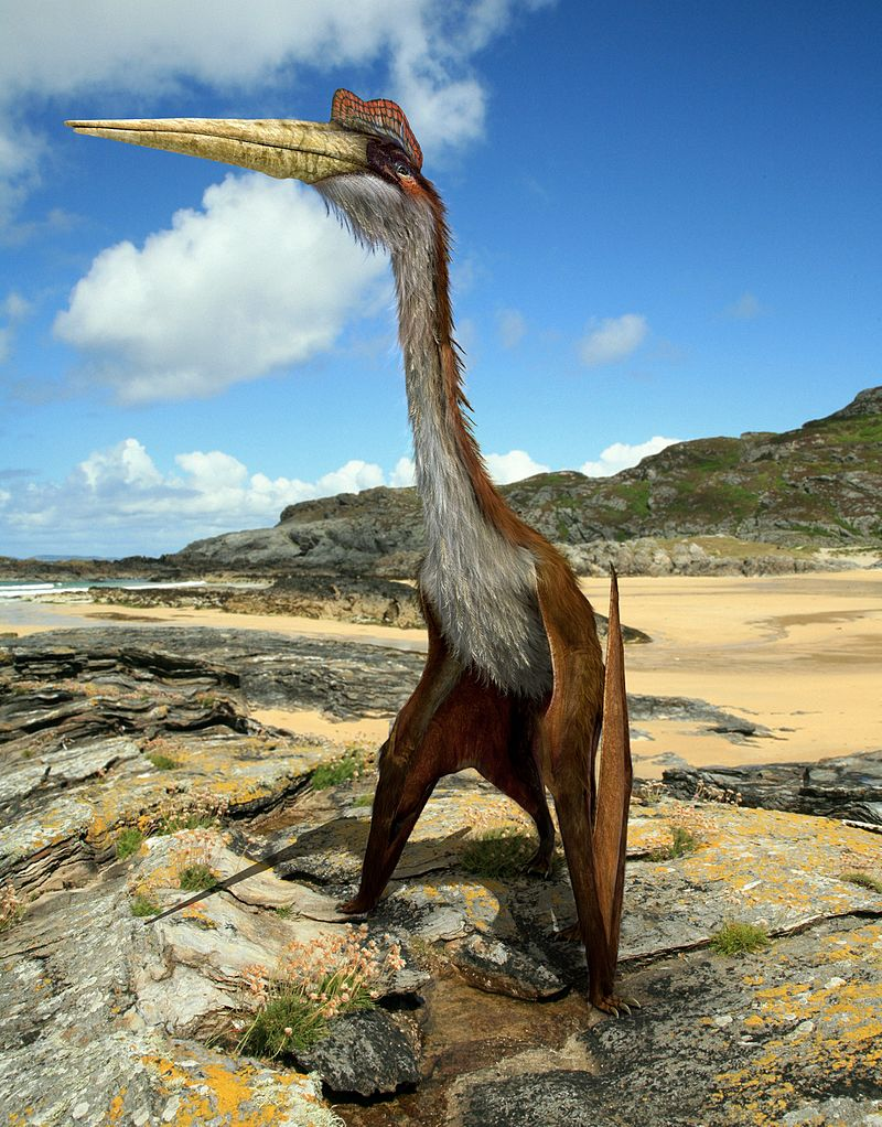 Quetzalcoatlus by Johnson Mortimer