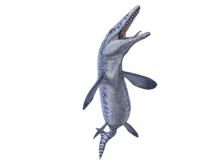 An illustration of Tylosaurus, a genus of Mosasaur, by Julius T. Csotonyi.  Courtesy Royal Tyrrell Museum of Palaeontology