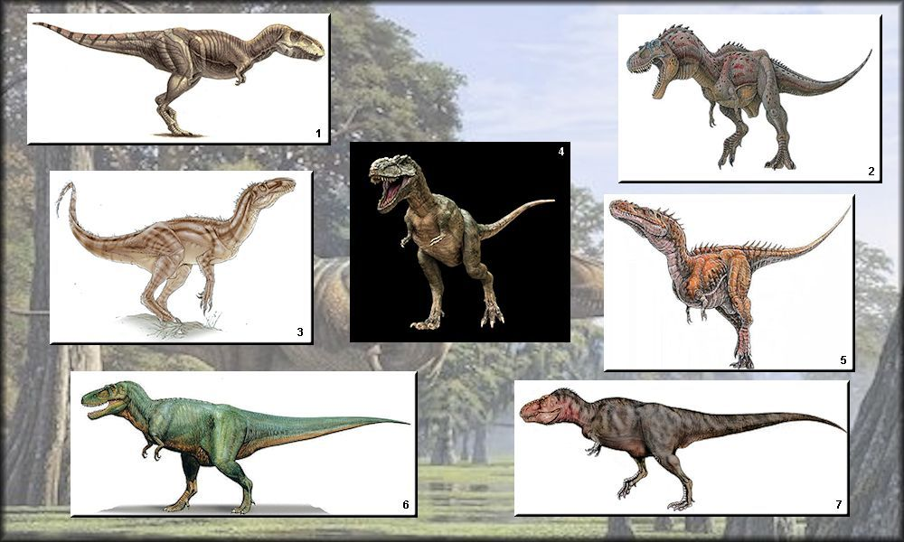 Some tyrannosaurids