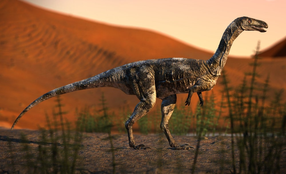 Vespersaurus was a small therapod dinosaur, measuring only 80 cm (31.5 in) tall, 1.6 m (5.2 ft) long and weighing 15 kg (33 lb)(Credit: Rodolfo Nogueira)