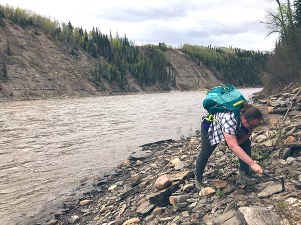 Victoria Arbour, a dinosaur expert at the Royal B.C. Museum, digs for fossils along the Pine River in northeastern B.C., where the ankylosaurian fossil bones were found 90 years ago. (Supplied by Victoria Arbour)