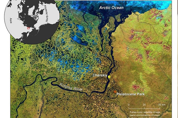 WILD: Pleistocene Park in Siberia is recreating the Ice Age natural landscape & wildlife. NIKITA ZIMOV
